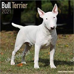 Kalendarz z terierami Bull Terrier 2021 Calendar  Kampanie i bitwy