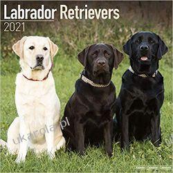 Kalendarz Labrador Retriever (Mixed) 2021 Calendar Pozostałe