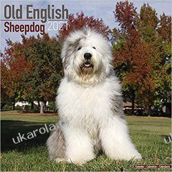 Kalendarz Owczarek Staroangielski Old English Sheepdog 2021 Calendar