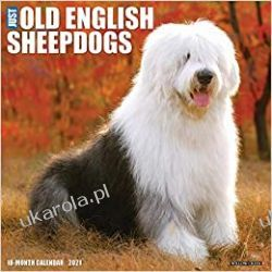 Kalendarz Owczarek Staroangielski Just Old English Sheepdogs 2021 Wall Calendar