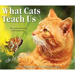 Kalendarz Koty What Cats Teach Us 2021 Box Calendar Kalendarze książkowe