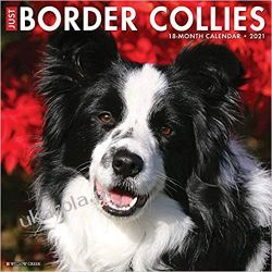 Kalendarz Just Border Collies 2021 Wall Calendar Albumy i czasopisma