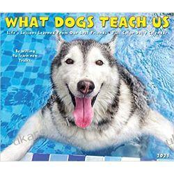 Kalendarz biurkowy Psy What Dogs Teach Us 2021 Box Pozostałe