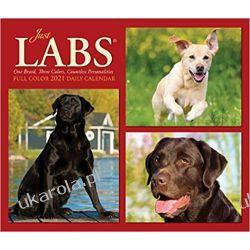 Kalendarz biurkowy Labradory Just Labs 2021 Calendar Pozostałe