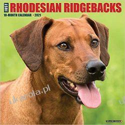 Kalendarz Just Rhodesian Ridgebacks 2021 Wall Calendar Książki i Komiksy