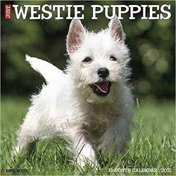 Kalendarz Just Westie Puppies 2021 Wall Calendar Książki i Komiksy