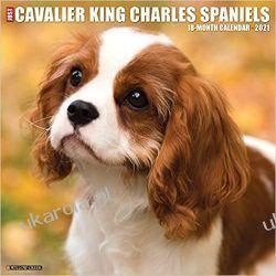Kalendarz Just Cavalier King Charles Spaniels 2021 Wall Calendar Książki i Komiksy