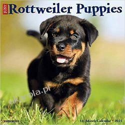 Just Rottweiler Puppies 2021 Wall Calendar Książki i Komiksy