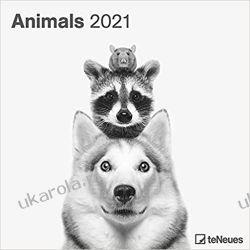 Kalendarz Zwierzęta Animals 2021 Square Wall Calendar Książki i Komiksy