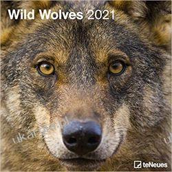 Kalendarz Wilki Wild Wolves 2021 Square Wall Calendar Książki i Komiksy