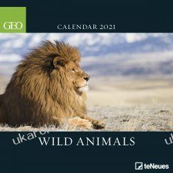 Kalendarz ścienny 2021 GEO Wild Animals Calendar dzikie zwierzęta Książki i Komiksy