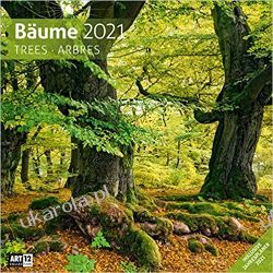 Bäume 2021 Calendar forest las Książki i Komiksy