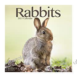 Rabbits 2021 Calendar (Square) króliki Książki i Komiksy