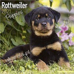 Rottweiler Puppies – Rottweiler Welpen 2021 Calendar Książki i Komiksy