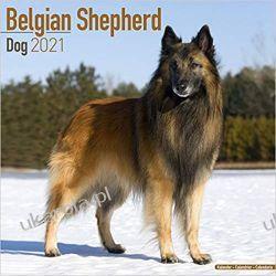 Belgian Shepherd Dog - Belgischer Schäferhund 2021 calendar Książki i Komiksy