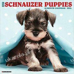 Kalendarz Sznaucery szczeniaki Just Schnauzer Puppies 2021 Calendar