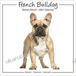 Kalendarz Buldog Francuski French Bulldog Studio 2021 Wall Calendar