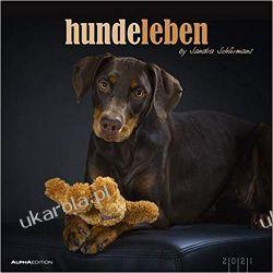 Kalendarz Psy Hundeleben 2021 Dogs Calendar Książki i Komiksy