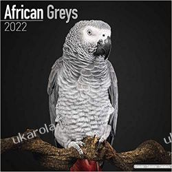 Kalendarz z papugami Żako African Greys 2022 Calendar Książki i Komiksy