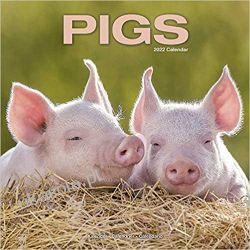 Kalendarz ze świniami Pigs 2022 calendar Książki i Komiksy