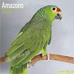 Kalendarz Amazonki Amazons 2022 Calendar Pozostałe