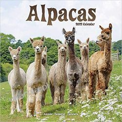 Kalendarz z alpakami Alpaki Alpacas Calendar 2022 Książki i Komiksy