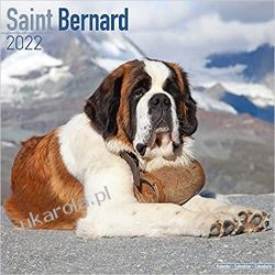 Kalendarz Saint Bernard 2022 Bernardyn Calendar Książki i Komiksy