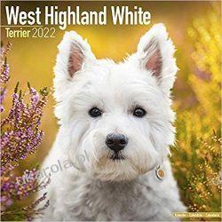 Kalendarz West Highland White Terrier 2022 Calendar Książki i Komiksy