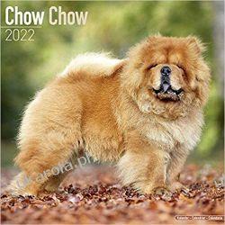 Kalendarz Chow Chow 2022 Calendar Książki i Komiksy