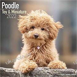 Kalendarz Pudel Toy and Miniature Poodle Calendar 2022 Książki i Komiksy