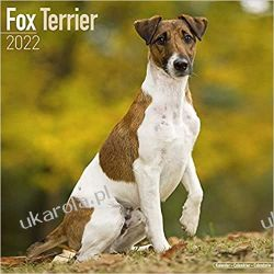 Kalendarz Fox Terrier 2022 Calendar Książki i Komiksy