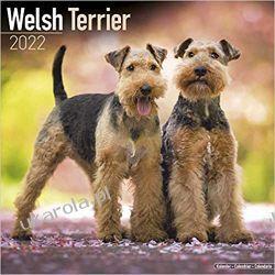 Kalendarz Terier walijski Welsh Terrier 2022 Calendar Kalendarze ścienne