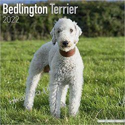 Kalendarz Bedlington Terrier 2022 Calendar Kalendarze ścienne