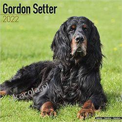 Kalendarz Gordon Setter 2022 Calendar Pozostałe