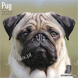 Kalendarz Mopsy Pugs Calendar 2022 Kalendarze ścienne