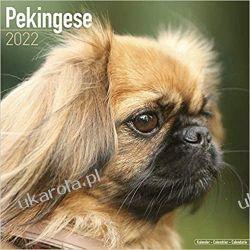 Kalendarz Pekińczyk Pekingese 2022 Calendar Kalendarze ścienne