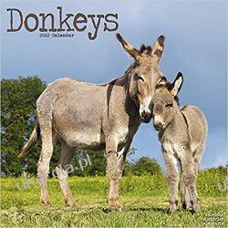 Kalendarz Osły Donkeys 2022 Calendar Książki i Komiksy