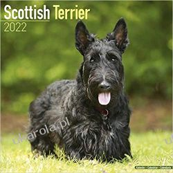 Kalendarz Terier szkocki Scottish Terrier 2022 Calendar Książki i Komiksy