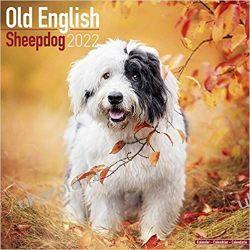 Kalendarz Owczarek staroangielski Old English Sheepdog - Bobtails 2022 Calendar Książki i Komiksy