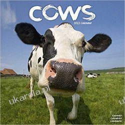 Kalendarz Krowy Cows 2022 Calendar Książki i Komiksy