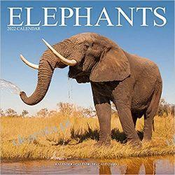 Kalendarz Słonie Elephants Calendar 2022 Książki i Komiksy