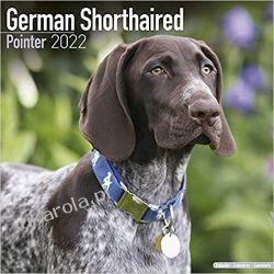 Kalendarz Wyżeł niemiecki krótkowłosy German Shorthaired Pointer 2022 Calendar Książki i Komiksy