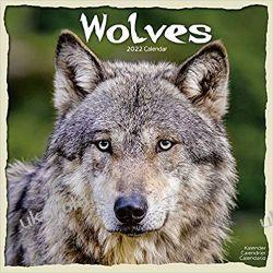 Kalendarz z wilkami Wolves 2022 Wilki Calendar Książki i Komiksy