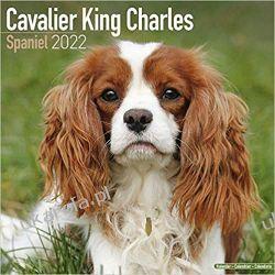 Kalendarz Cavalier King Charles Spaniel 2022 Książki i Komiksy