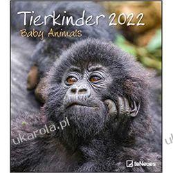 Tierkinder 2022 Calendar baby animals zwierzęta Książki i Komiksy