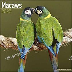Kalendarz Papugi Ary Macaws 2022 Calendar Książki i Komiksy
