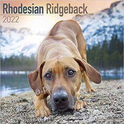 Kalendarz Rhodesian Ridgeback Calendar 2022 Książki i Komiksy