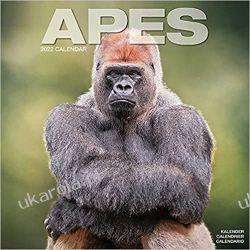 Kalendarz Apes 2022 Małpy Goryle Calendar Książki i Komiksy