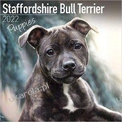 Kalendarz Staffordshire Bull Terrier Puppies Calendar 2022 Sportowcy