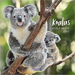 Kalendarz z misiami Koala bears Baren 2022 Calendar Książki i Komiksy